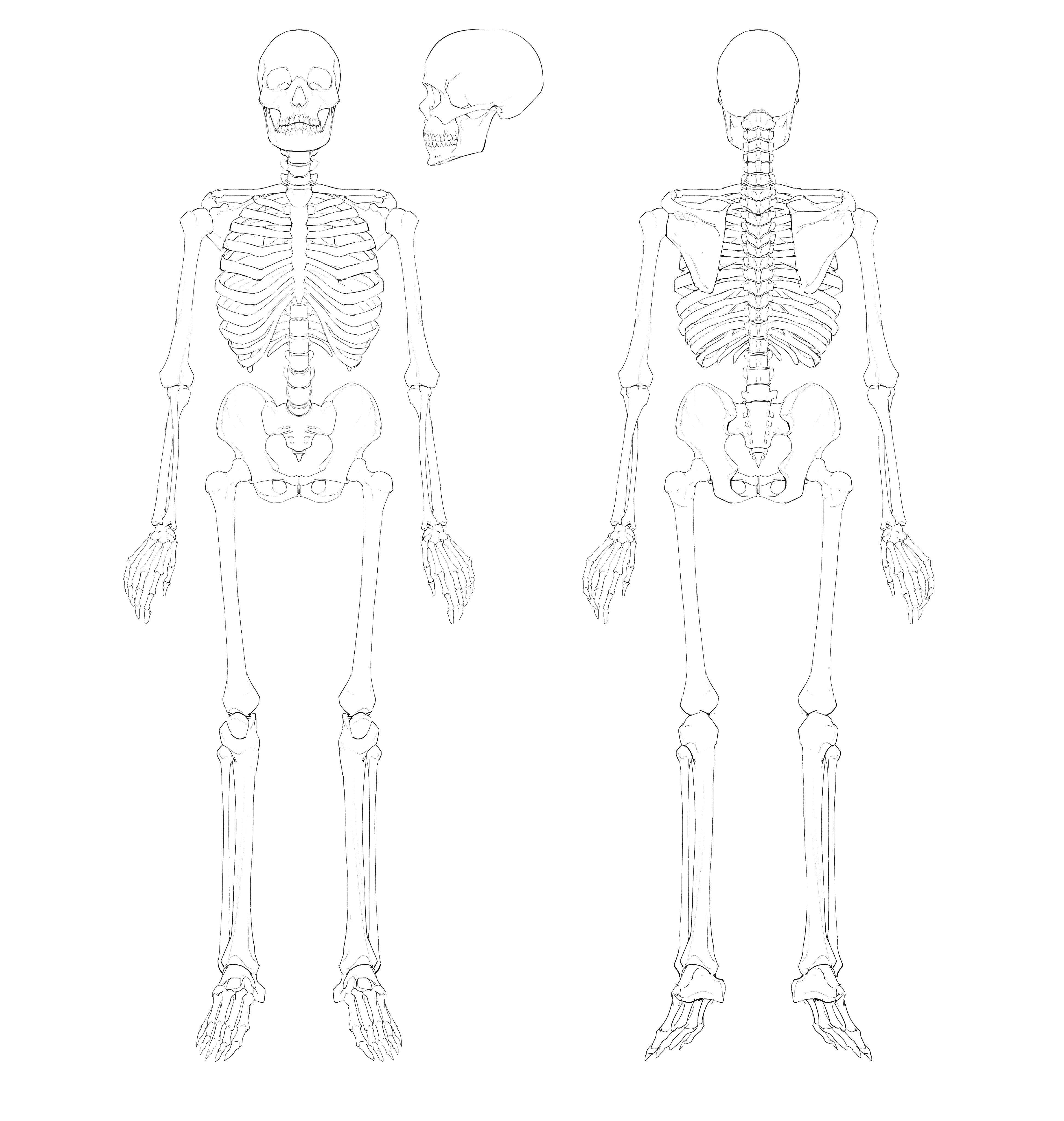 1-1_skeleton_uncolored.jpeg