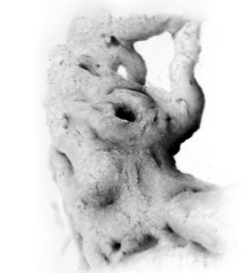 גזע עץ 2014 הפוך  150-170.jpg