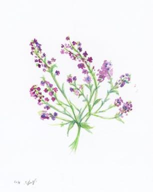 bouquet of purple flowers16x20 in.jpg
