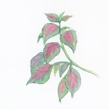 18x18 leaves.jpg