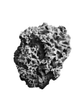 סלע 2019 150-150 סמ אבקת פחם על נייר.jpg